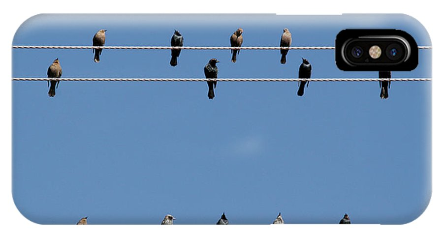 Birds IPhone X Case featuring the photograph Bird On A Wire by Christine Till