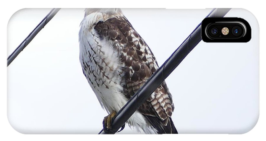 Hawk IPhone X / XS Case featuring the photograph Bird On A Wire by Debbie Storie