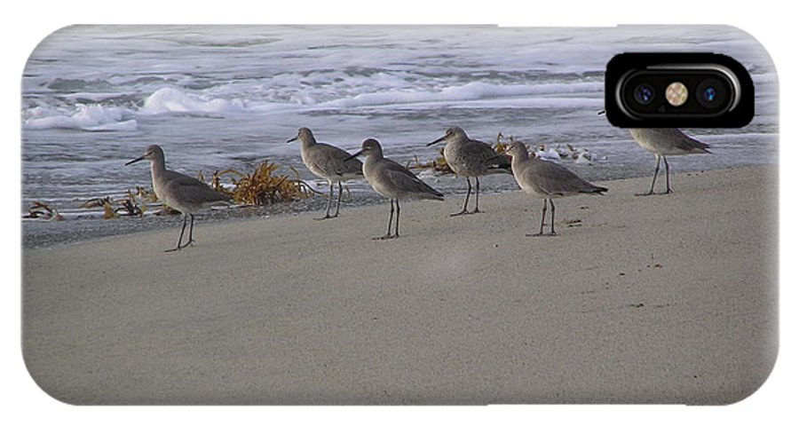 Birds IPhone X Case featuring the photograph Bird Walk by Louise Magno