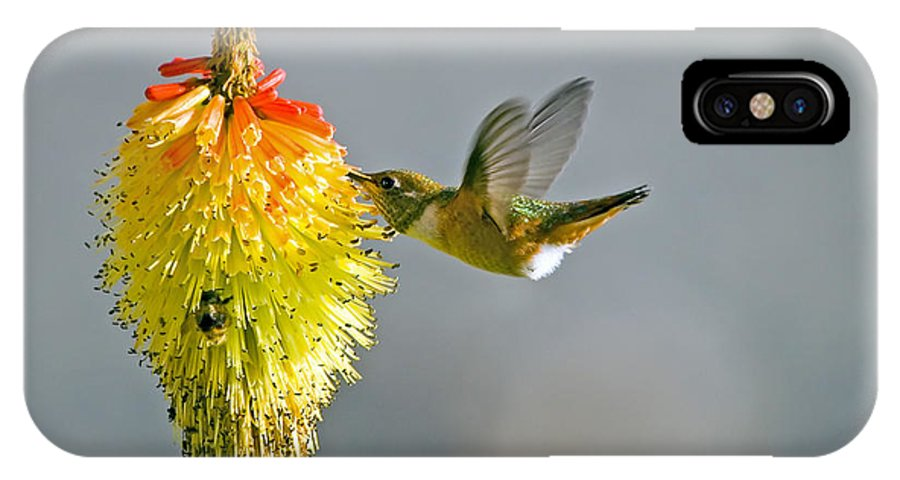 Hummingbird IPhone Case featuring the photograph Birds And Bees by Mike Dawson