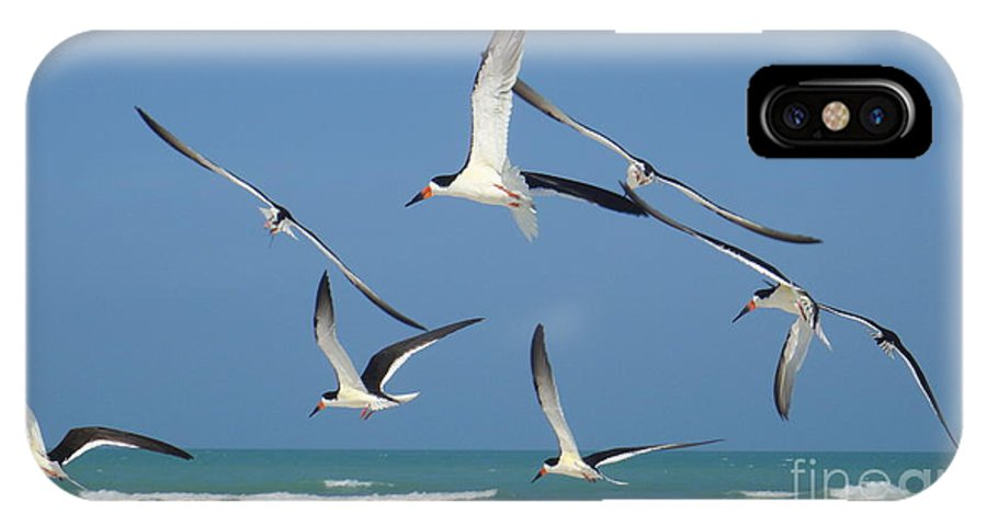 Birds IPhone X Case featuring the photograph Birds In Paradise by Jan Daniels
