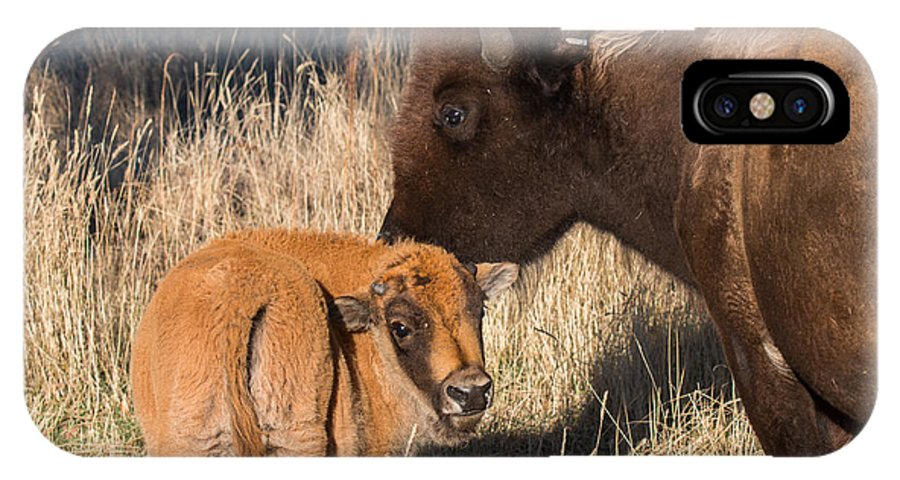 Nature IPhone X Case featuring the photograph Bison Calf And Its Mother by Tony Hake