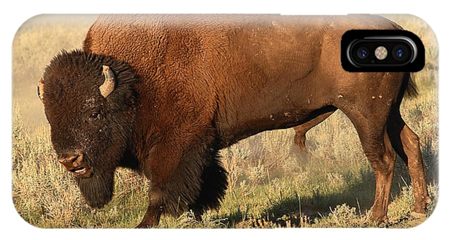 Bison IPhone X Case featuring the photograph Bison Huffing And Puffing For Herd by Max Allen