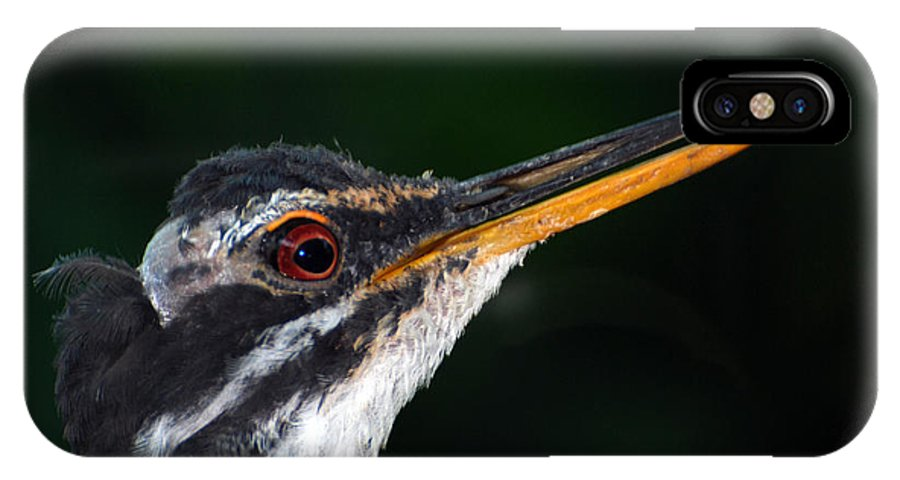 Teresa Blanton IPhone X Case featuring the photograph Bittern by Teresa Blanton