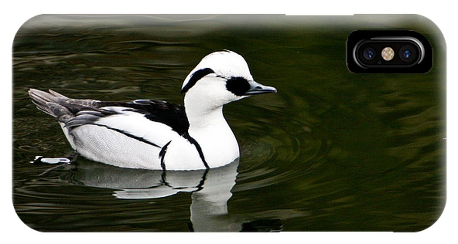 Duck IPhone Case featuring the photograph Black And White Duck by Douglas Barnett