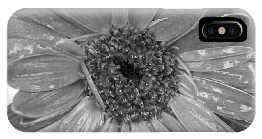 Gerber Daisy IPhone X Case featuring the photograph Black And White Gerbera Daisy by Amy Fose