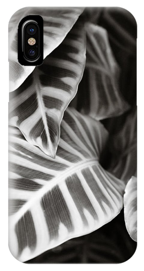 Black IPhone X Case featuring the photograph Black And White Leaves by Marilyn Hunt