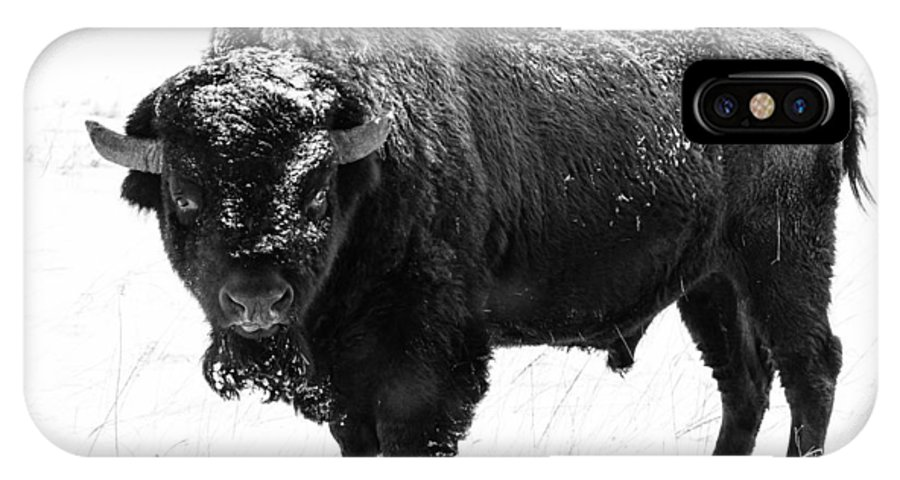 Nature IPhone X Case featuring the photograph Black And White Of A Massive Bison Bull In The Snow by Tony Hake