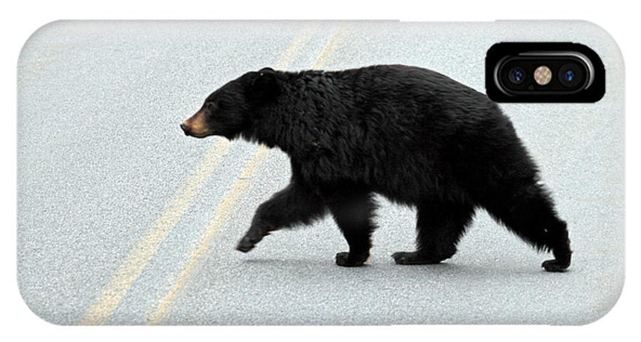 Black IPhone X Case featuring the photograph Black Bear Crossing The Road by Pierre Leclerc Photography