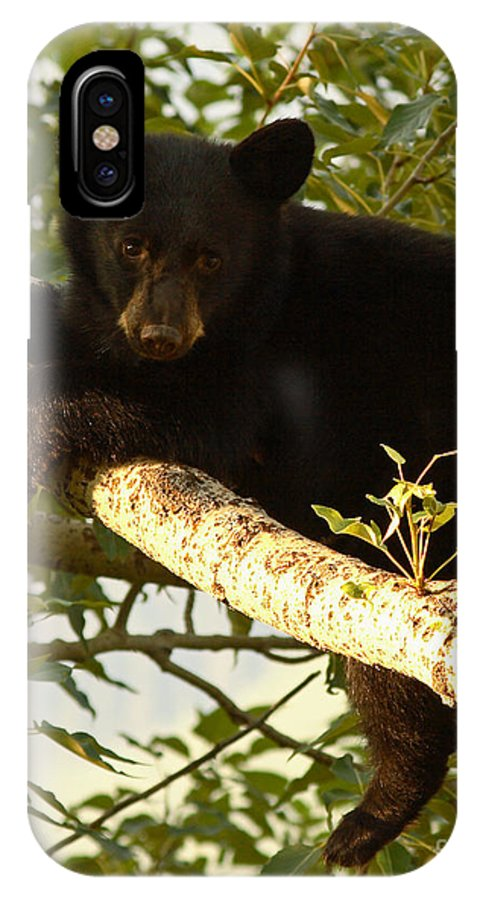 Bear IPhone X / XS Case featuring the photograph Black Bear Cub Resting On A Tree Branch by Max Allen