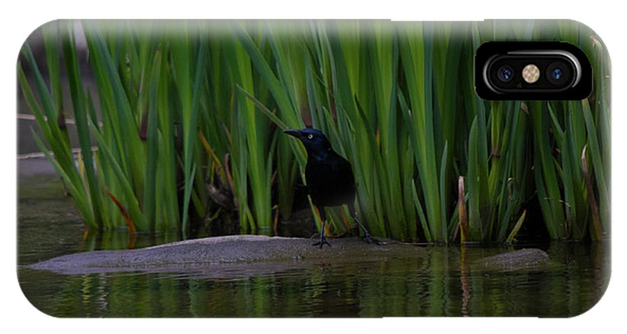 Black Bird IPhone X Case featuring the photograph Black Beauty by Donald Crosby