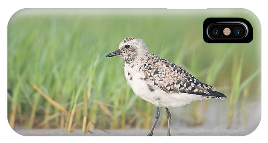 Clarence Holmes IPhone X Case featuring the photograph Black-bellied Plover I by Clarence Holmes