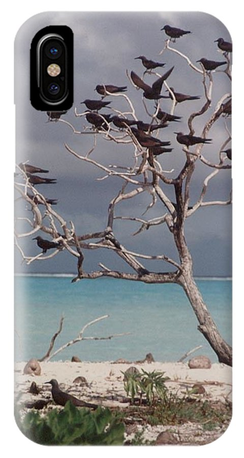 Charity IPhone Case featuring the photograph Black Birds by Mary-Lee Sanders