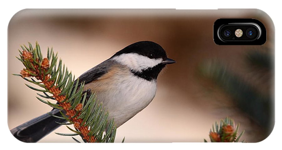Chickadee IPhone X Case featuring the photograph Black-capped Cickadee II by Bruce J Robinson