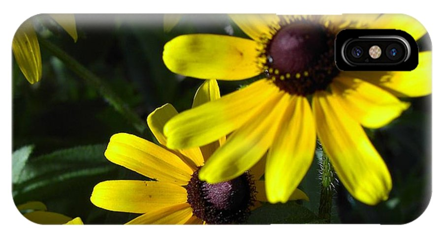 Charity IPhone Case featuring the photograph Black Eyed Susan by Mary-Lee Sanders