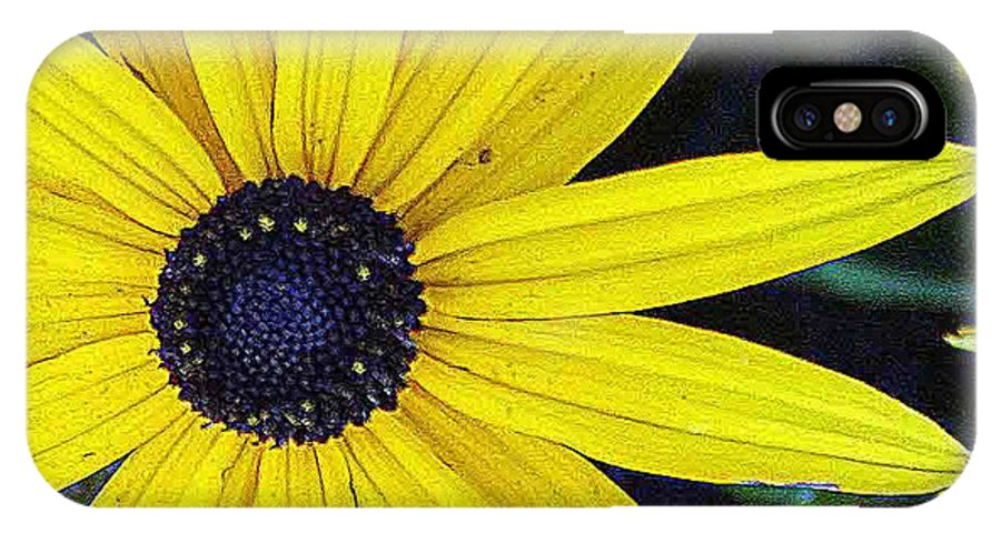 Pictures Of Washington State IPhone X Case featuring the photograph Black Eyed Susan by Wendy Raatz Photography