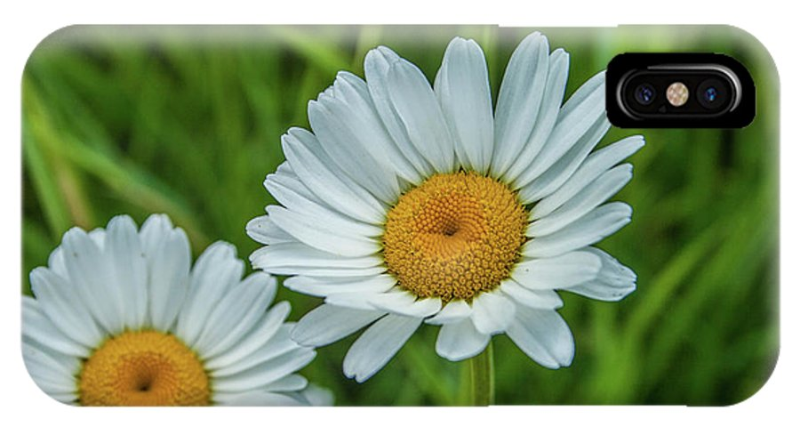 Flower IPhone X Case featuring the photograph Black-headed Daisy's by Tony Baca