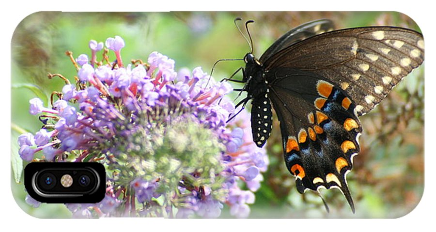 Black IPhone X / XS Case featuring the photograph Black Swallowtail by Tammy Finnegan