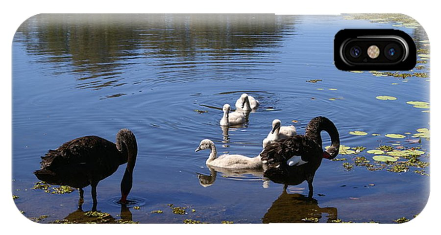 Bird IPhone X Case featuring the photograph Black Swan's by Brian Leverton