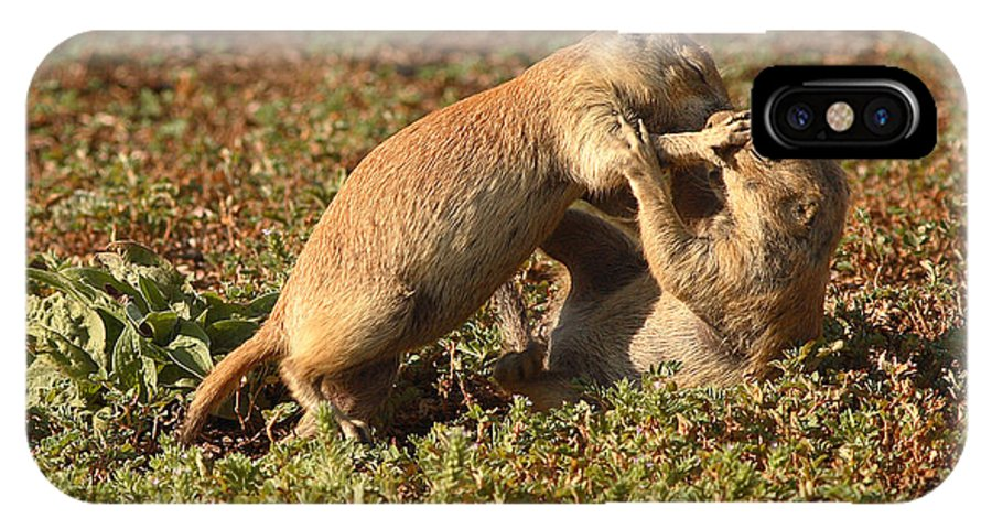 Prairie Dog IPhone X Case featuring the photograph Black-tailed Prairie Dogs Wrestling Around by Max Allen