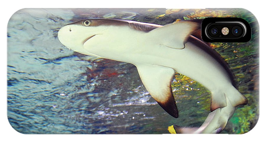 Shark Black Tipped Reef IPhone X Case featuring the photograph Black Tipped Reef Shark-1 by Steve Somerville