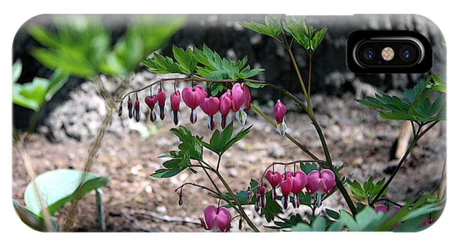 Flowers IPhone X Case featuring the photograph Bleeding heart liberals by David Bearden