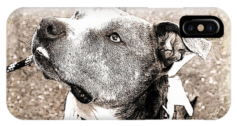 Dog IPhone X Case featuring the photograph Blizzard by Joyce Baldassarre