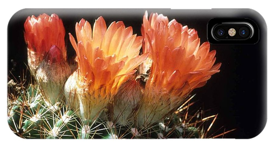 Barrel Cactus IPhone X Case featuring the photograph Bloomin' Barrel by Laurie Paci