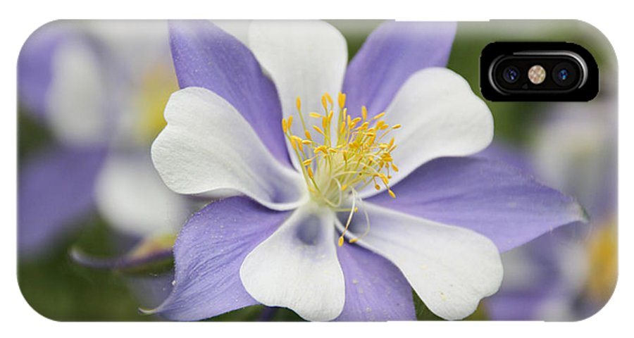 Columbine IPhone X Case featuring the photograph Blooming Columbine by Becky Canterbury