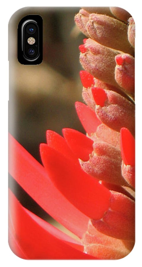Fire Flame Spike Red Flower Plant Photo Photography Close-up IPhone X Case featuring the photograph Blooming Fire Spike by Christina Geiger