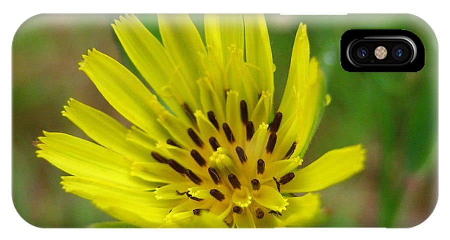 Flower IPhone Case featuring the photograph Blossoming Yellow Goatsbeard by Melissa Parks
