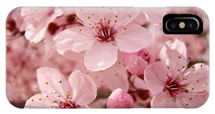 Nature IPhone X Case featuring the photograph Blossoms Art Prints 63 Pink Blossoms Spring Tree Blossoms by Baslee Troutman