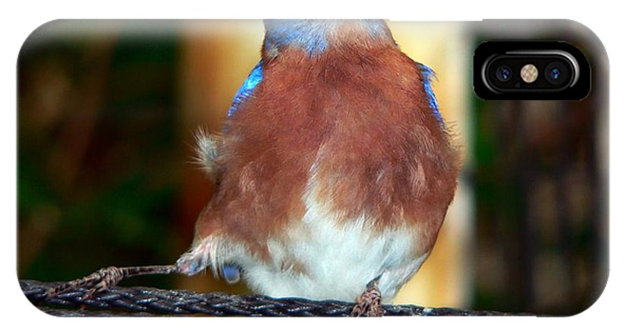 Tanager IPhone Case featuring the photograph Blue And Brown Tanager by RiaL Treasures