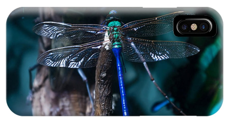 Blue IPhone X Case featuring the photograph Blue and Green Dragonfly by Douglas Barnett