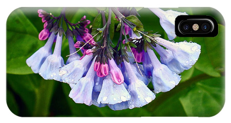 Native Landscape IPhone X Case featuring the photograph Blue Bells by Steve Karol