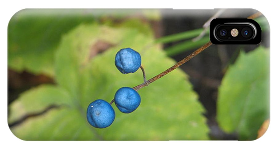 Blue IPhone Case featuring the photograph Blue Berries by Kelly Mezzapelle