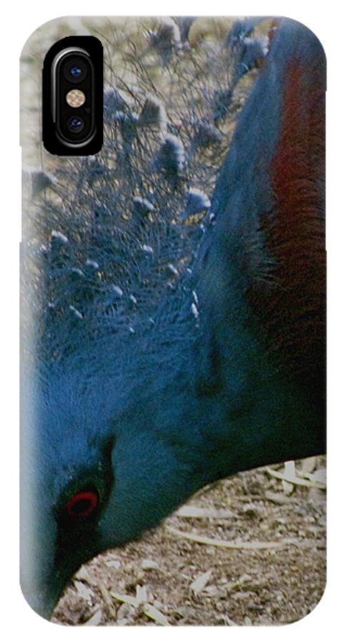 Blue Bird Portrait IPhone X / XS Case featuring the photograph Blue Bird Portrait by Debra   Vatalaro