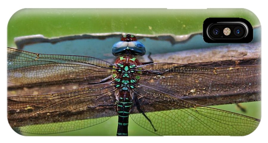 Dragonfly IPhone X Case featuring the photograph Blue Dragon by Raquel Rogers