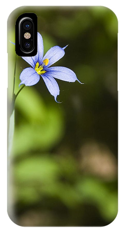 Blue Eye Grass Flower Nature Yellow Green Delicate Small Little IPhone X Case featuring the photograph Blue-eyed Grass IIi by Andrei Shliakhau