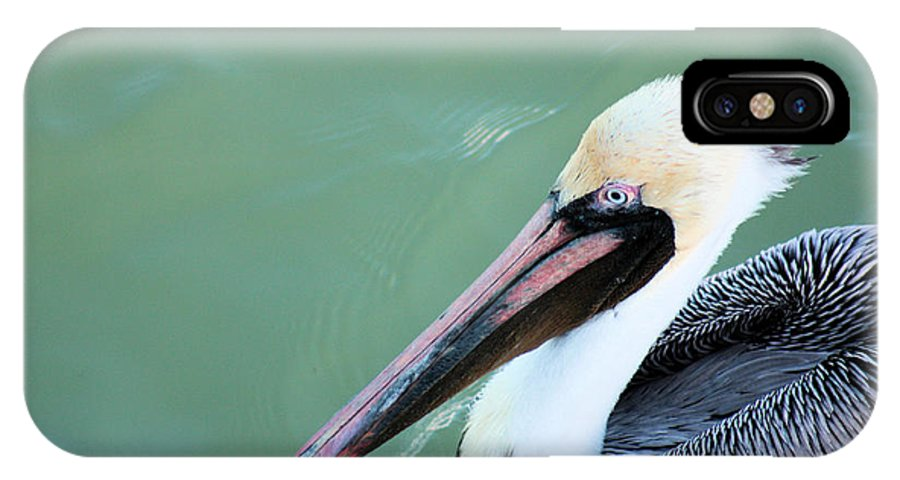 Pelican IPhone X Case featuring the photograph Blue Eyes by Janet Pugh