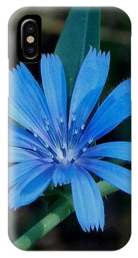 Blue IPhone X Case featuring the photograph Blue Chicory Flower by Trinket's Legacy