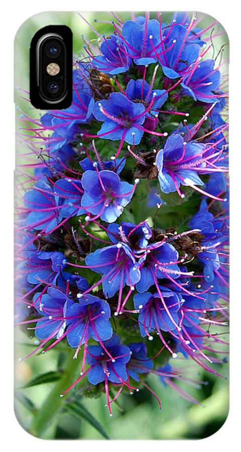 Flower IPhone X Case featuring the photograph Blue Flowers by Amy Fose