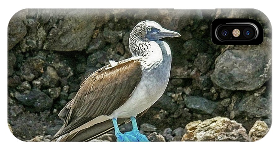 Blue Footed Boobie IPhone X Case featuring the photograph Blue Footed Boobie by Elizabeth Hershkowitz