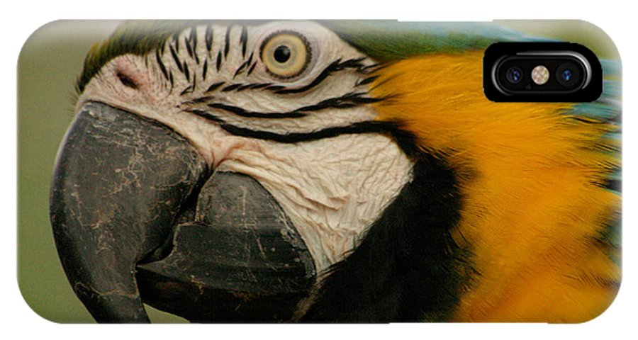 Parrot IPhone Case featuring the photograph Blue Gold Macaw South America by Ralph A Ledergerber-Photography