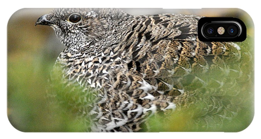 Blue Grouse IPhone X Case featuring the photograph Blue Grouse Hen 1 by Larry Ricker