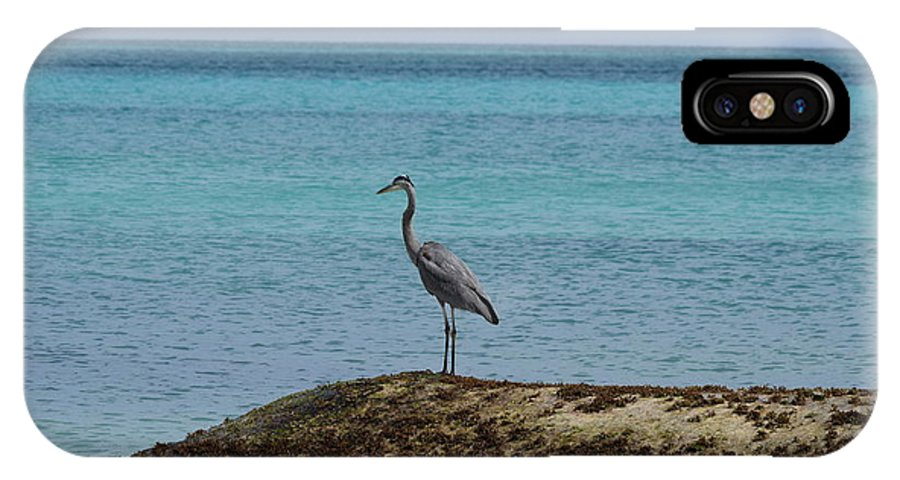 Mexico IPhone X Case featuring the photograph Blue Heron by Christina McNee-Geiger