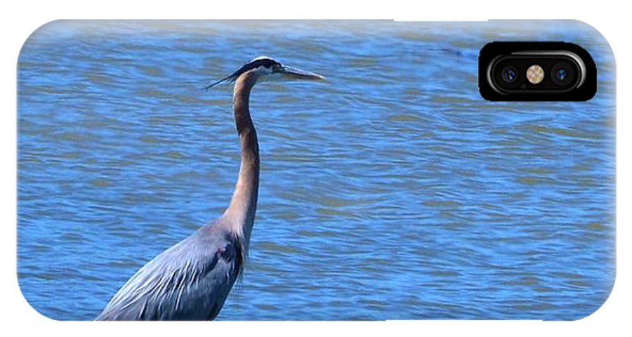 Heron IPhone X Case featuring the photograph Blue Heron by Eileen Brymer