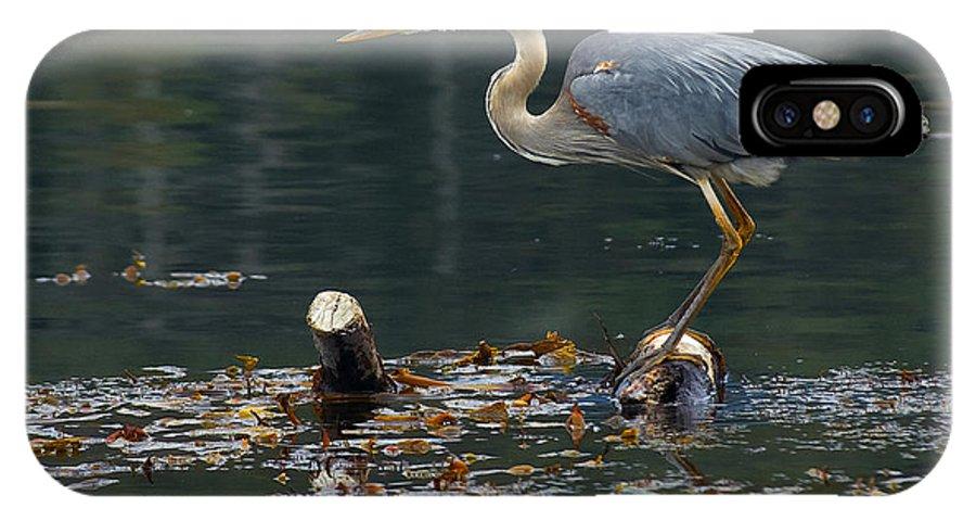 Blue Heron IPhone X Case featuring the photograph Blue Heron by Eyal Nahmias