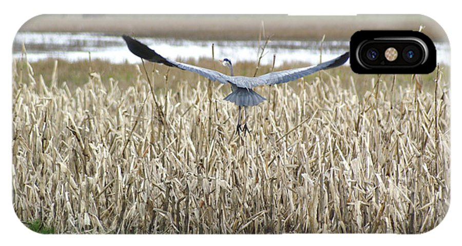 Heron IPhone X / XS Case featuring the photograph Blue Heron Flight by Louise Magno