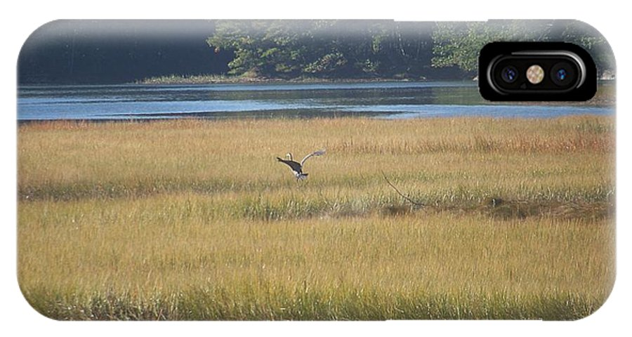 Sea IPhone X / XS Case featuring the photograph Blue Heron ...in Flight by Bonny Bartlett
